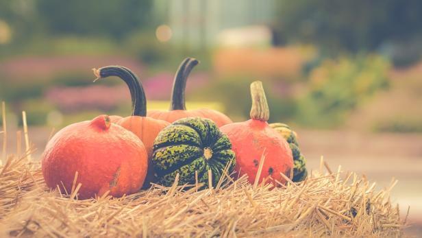 pumpkin-2989569-960-720.jpg